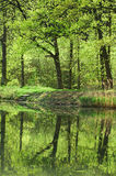 Spring in the forest. Water with reflection in the forest Stock Photo