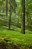 Spring in forest. Hike in a deep late spring forest. European vegetation Royalty Free Stock Photo