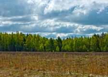 Spring forest. And field under cloudy sky Royalty Free Stock Photography