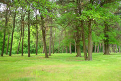 Spring Forest. A picture of beautiful green forest in the spring time stock photo