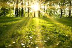 Spring forest. Sunlight in the green forest, spring time royalty free stock images