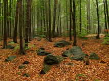 Spring in the forest. Spring forest in Sowie Gury mountains, Poland Stock Images