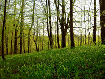 Spring forest Stock Photography