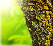 Spring forest abstract background Royalty Free Stock Images