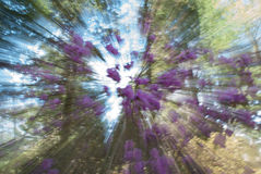 Spring Forest Abstract Swirl, selective focus. Stock Photos