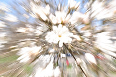 Spring Forest Abstract Swirl, selective focus. Stock Image