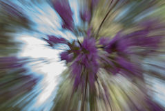 Spring Forest Abstract Swirl, selective focus. Stock Images