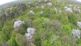 Spring forest aerial stock video footage