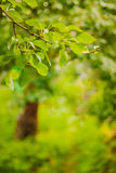 Spring forest background Royalty Free Stock Image
