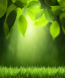 Spring forest  background Stock Photography