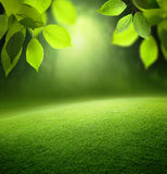 Spring forest  background Royalty Free Stock Images