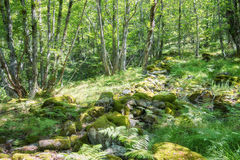 Spring in the forest Stock Photography