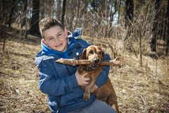 In the spring in the forest on a bright sunny day the boy plays with the dog royalty free stock photos