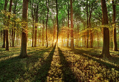 Spring forest. Spring in the forest early morning Stock Images