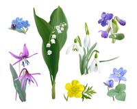 Spring forest flower set - realistic style vector. Wildflowers as Snowdrops, Trout lily, Violets, Forget me not, Buttercup and Liverwort. Vector illustration stock illustration