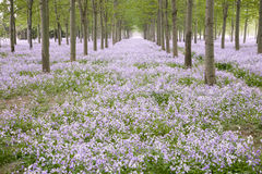 Spring forest with flowers Stock Images