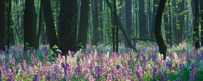 Spring forest with flowers Stock Photo