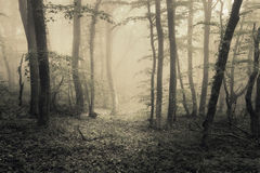 Spring forest in fog. Beautiful natural landscape. Vintage styl Royalty Free Stock Photography