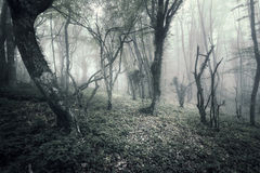 Spring forest in fog. Beautiful natural landscape. Vintage styl Royalty Free Stock Images