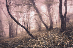 Spring forest in fog. Beautiful natural landscape. Vintage style Royalty Free Stock Image