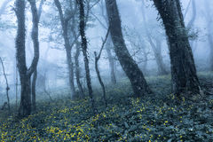 Spring forest in fog. Beautiful natural landscape. Vintage style Royalty Free Stock Photography
