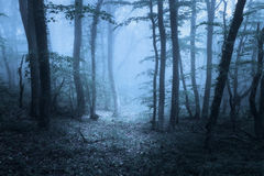 Spring forest in fog. Beautiful natural landscape. Vintage style Royalty Free Stock Photos