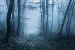 Spring forest in fog. Beautiful natural landscape. Vintage style Royalty Free Stock Images