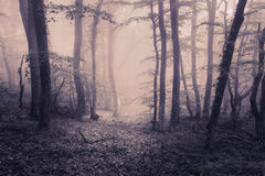 Spring forest in fog. Beautiful natural landscape. Vintage style Stock Image
