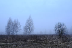 Spring forest in a fog Stock Photo