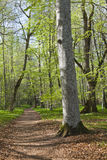 Spring forest footpath Stock Images