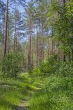 Spring forest. Forest path. Sunny clear day stock photos