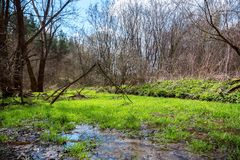 Forest glade with green grass. A spring forest glade with fresh green grass is highlighted by morning sunlight Stock Photography