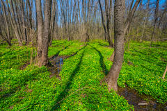 Spring forest glade scene Stock Photography