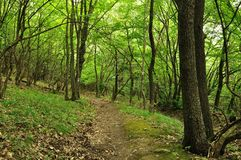 Spring forest with high trees Stock Image
