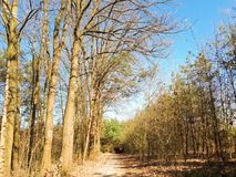 Spring forest landscape. Background on sunny day Royalty Free Stock Photos