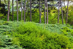 Spring forest. Landscape of green spring forest in sunny day Stock Photo