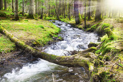 Spring Forest Lanscape with River Flowing Royalty Free Stock Image