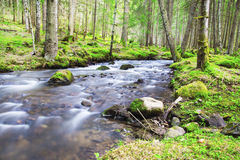 Spring Forest Lanscape with River Flowing Stock Photo