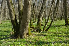 Spring in forest Royalty Free Stock Photos