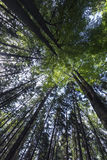 Spring forest. Stock Photo