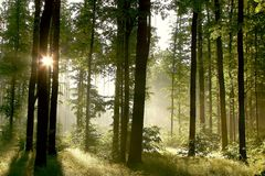 Spring forest with morning sunbeams Royalty Free Stock Images