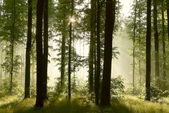 Spring forest with morning sunbeams Stock Images