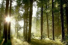 Spring forest with morning sunbeams Royalty Free Stock Photography