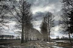 Spring forest with no leaves Royalty Free Stock Images