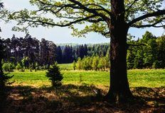 Spring forest panorama. Illustrations,woods landscape stock images