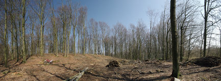 Spring forest panorama. Wide panorama of spring forest. Empty field surrounded by barren trees, a small motorbike at the left side to give the sense of scale Stock Photography