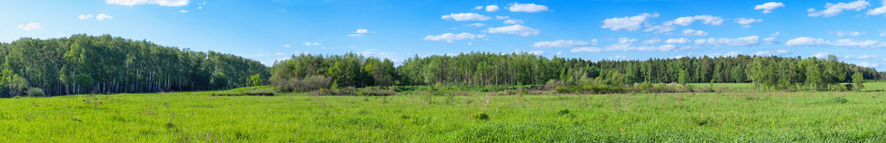 Spring forest panoramic Royalty Free Stock Images