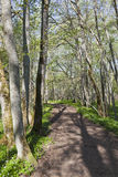 Spring forest path Royalty Free Stock Photography