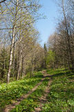 Spring in a forest Royalty Free Stock Photography