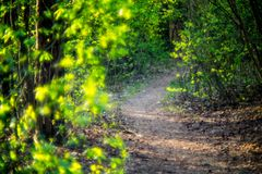Spring forest path. Forest path in spring, green young foliage lit by sunset light Royalty Free Stock Photo